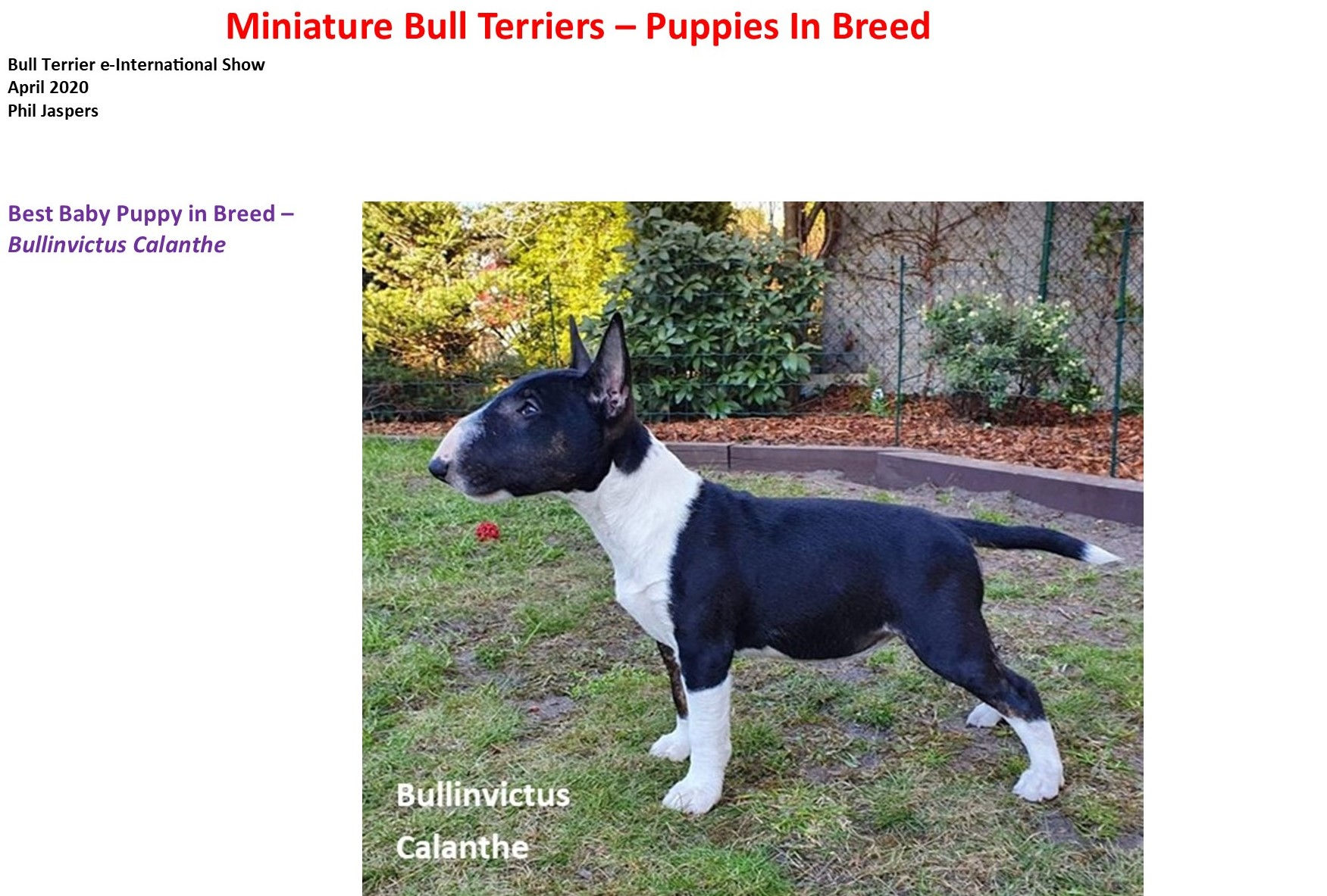 MBT Puppies In Breed 1